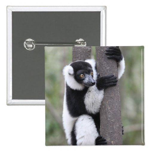 Black and White Ruffed Lemur on Tree Pinback Button