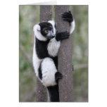 Black and White Ruffed Lemur on Tree Card