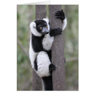 Black and White Ruffed Lemur on Tree Greeting Card