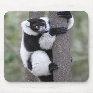 Black and White Ruffed Lemur on Tree Mousepads