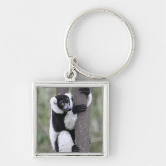 Black and White Ruffed Lemur on Tree Silver-Colored Square Keychain
