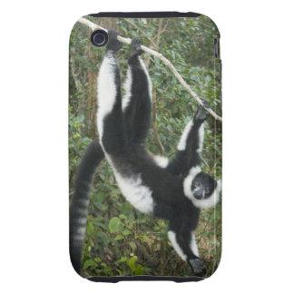 Black and White Ruffed Lemur, (Varecia iPhone 3 Tough Case