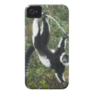 Black and White Ruffed Lemur, (Varecia iPhone 4 Case