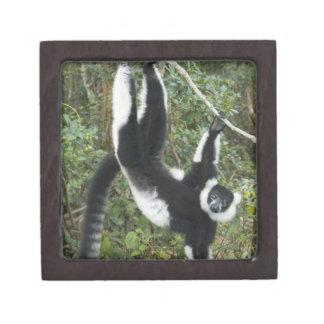 Black and White Ruffed Lemur, (Varecia Jewelry Box