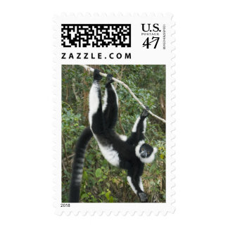 Black and White Ruffed Lemur, (Varecia Postage