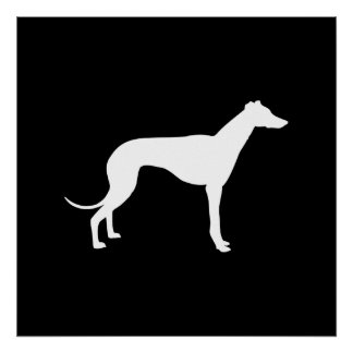Black and White Shape of Greyhound Poster