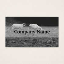 Black and White Sheep In A Pasture Photo Business Card