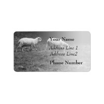 Black and White Sheep In A Pasture Photo Label