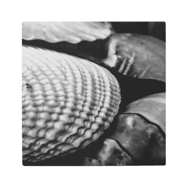 Beach Themed Black and White Shells Metal Print