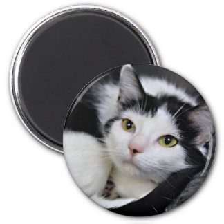 Black and White Shelter Cat Magnets