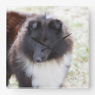 Black and White Sheltie Square Wall Clock