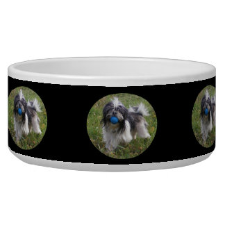 Black and White Shih Tzu with Ball Bowl