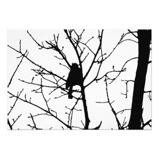 Black and White Silhouette of chickadee in a tree Photo Print