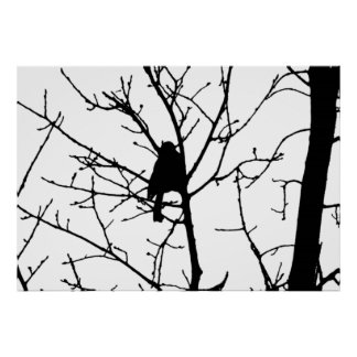Black and White Silhouette of chickadee in a tree Print