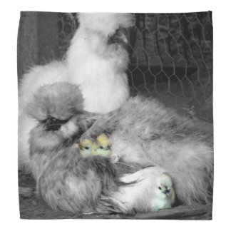 Black and White Silkie Chickens with yellow Chicks Bandana