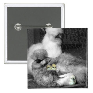 Black and White Silkie Chickens with yellow Chicks Buttons