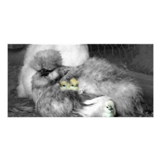 Black and White Silkie Chickens with yellow Chicks Card