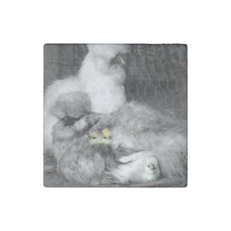 Black and White Silkie Chickens with yellow Chicks Stone Magnet