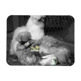 Black and White Silkie Chickens with yellow Chicks Flexible Magnet