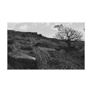 black and white single tree canvas print