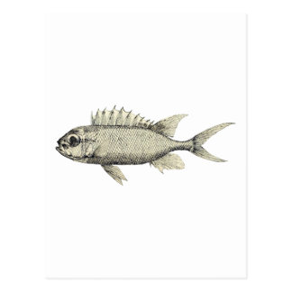 Black and White Sketchy Fish Illustration Postcard