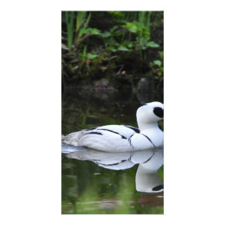 Black and White Smew or Sea Diving Duck Waterfowl Card