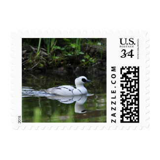 Black and White Smew or Sea Diving Duck Waterfowl Postage
