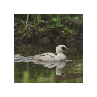 Black and White Smew or Sea Diving Duck Waterfowl Wood Wall Decor