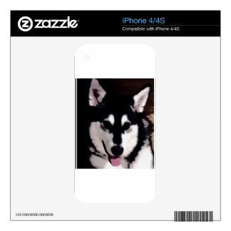 Black and white smiling Alaskan Malamute Decals For iPhone 4S