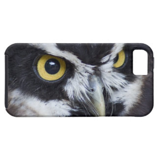 Black and White Specacled Owl iPhone 5 Case