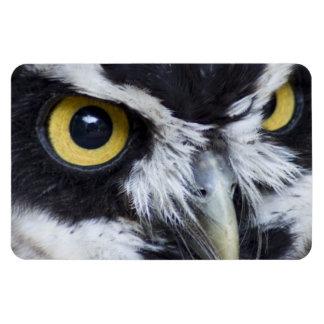 Black and White Specacled Owl Magnet