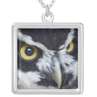 Black and White Specacled Owl Silver Plated Necklace