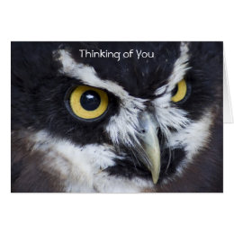 Black and White Specacled Owl Thinking Of You Card