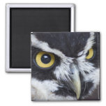 Black and White Spectacled Owl Refrigerator Magnets