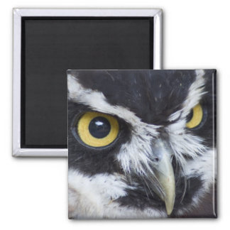 Black and White Spectacled Owl Magnet