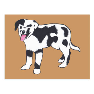 Black and White Spotted Dog Postcards