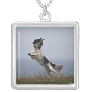 black and white Springer Spaniel playing with Silver Plated Necklace