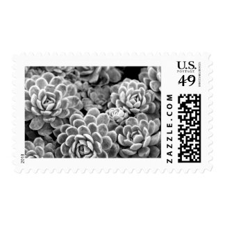 Black and White Star Succulent Postage Stamp
