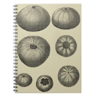 Black and White Starfish Spiral Notebook