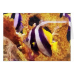 Black and White Striped Angelfish Cards