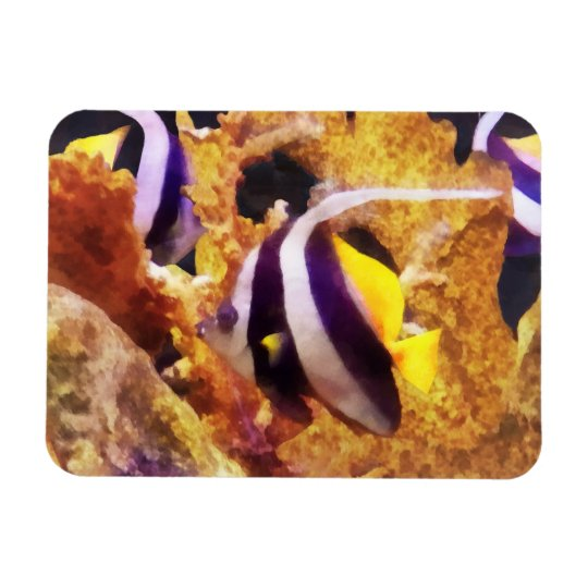 Black and White Striped Angelfish Magnet