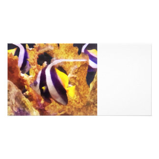 Black and White Striped Angelfish Picture Card