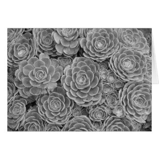 Black and White Succulent Note Card