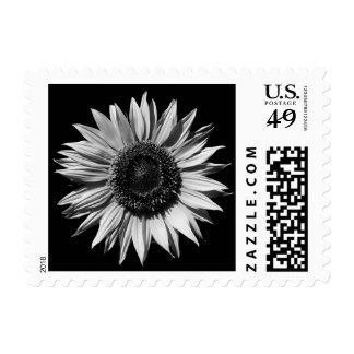 Black and White Sunflower Photo Postage Stamps