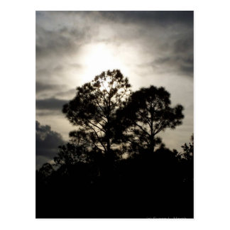 Black and white surreal photograph of pine trees postcard