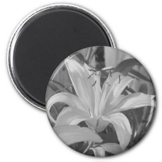 Black and White Tiger Lily Magnet