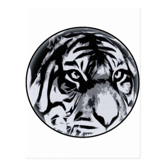black and White Tiger Postcard