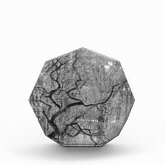 black and white tree award