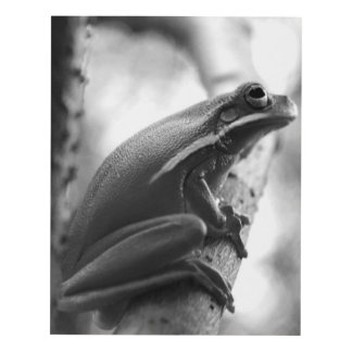 Black and White Tree Frog  Wall Art