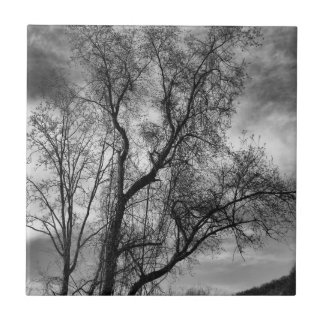 Black and White Tree Landscape Photo Tile